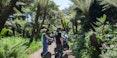 fern-grotto-golden-gate-park-segway-tour-1200.jpg