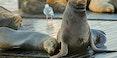 Pier-39-Sea-lions-1000.jpg